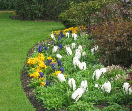 Садовых цветов клумбовые цветы фото