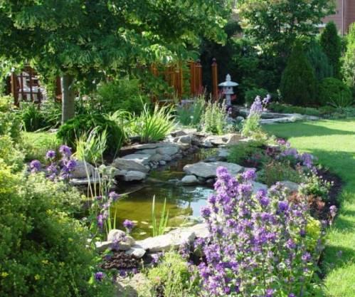Декоративные кустарники кустарники