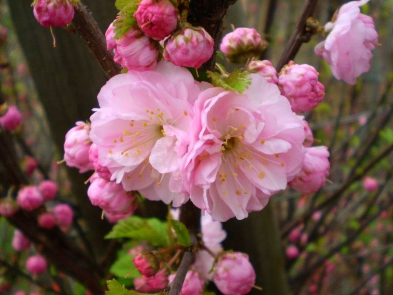 Цветущие кустарники на юге - Фото цветов.