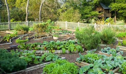 Сад и огород семена челябинск