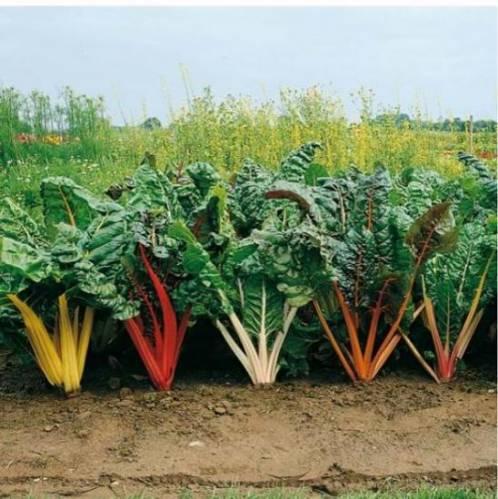 И огород магазин сад и огород магазин