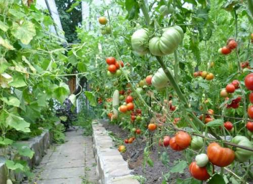 Презентация растения сада и огорода
