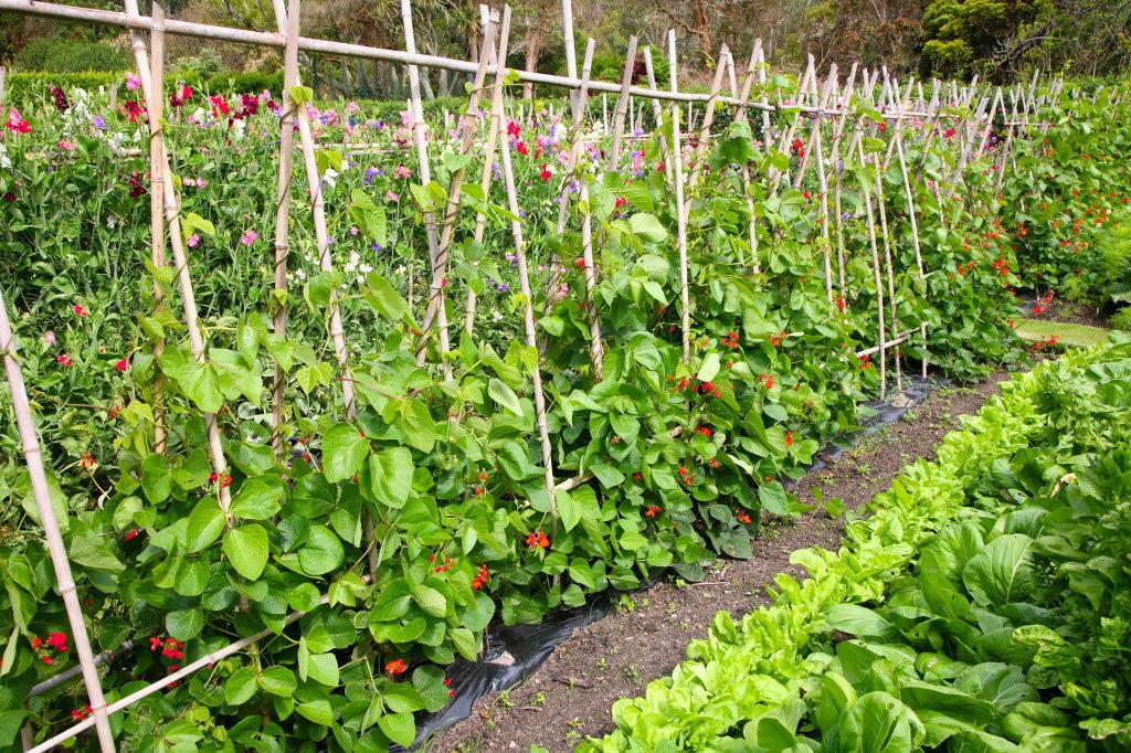 Огородный дизайн фото