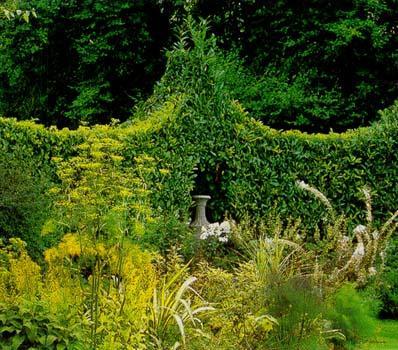 Живая изгородь кустарники фото