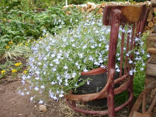 Клумба непрерывного цветения клумба